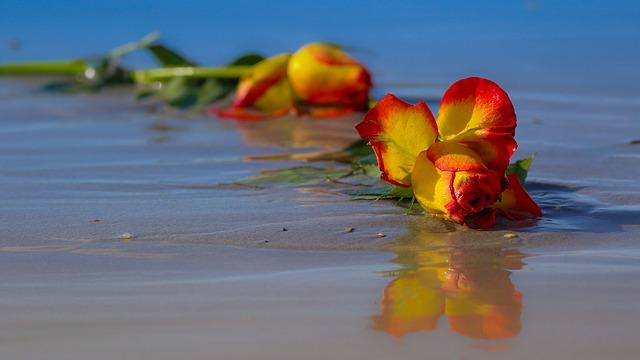 zahozená růže