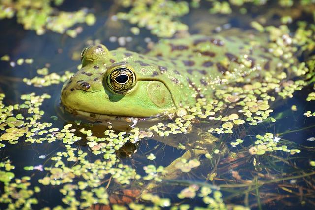 hlava žáby