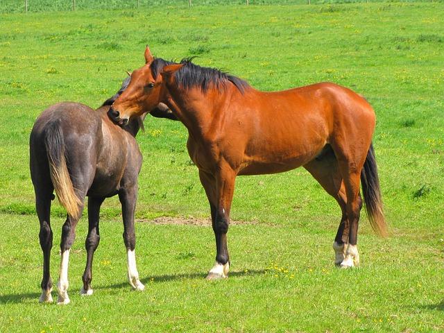 koně v přírodě